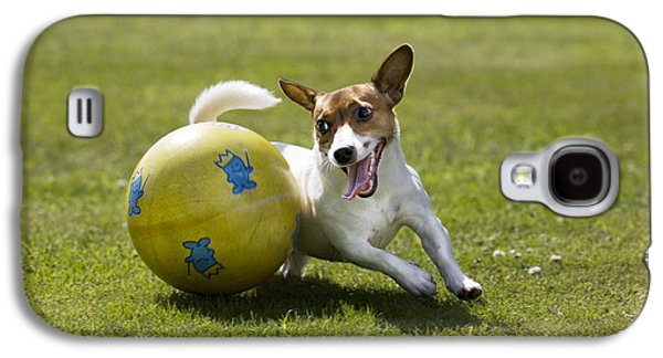 Jack Russell Terrier Plays With Ball Galaxy S4 Case by Johan De Meester