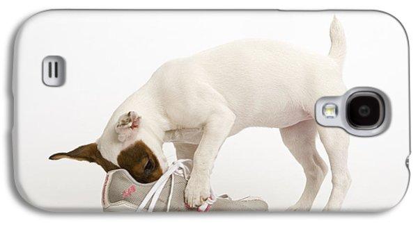 Sneaker Galaxy S4 Cases - Jack Russell With Sneaker Galaxy S4 Case by Jean-Michel Labat