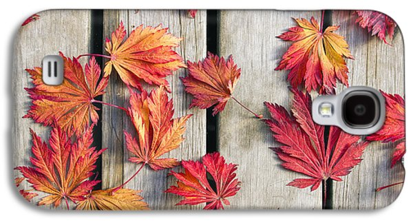 Fall Trees Fall Color Galaxy S4 Cases - Japanese Maple Tree Leaves on Wood Deck Galaxy S4 Case by David Gn