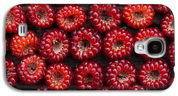 Rosaceae Galaxy S4 Cases - Japanese Wineberry Pattern Galaxy S4 Case by Tim Gainey