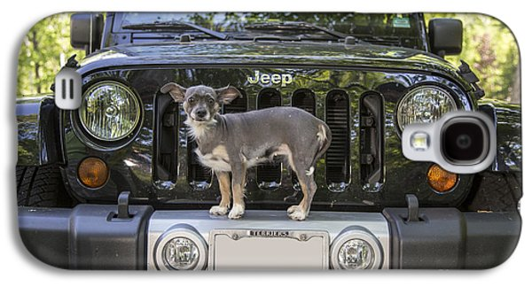 Studio Photographs Galaxy S4 Cases - Jeep Dog Galaxy S4 Case by Edward Fielding