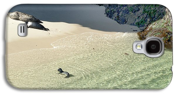 Sea Lion Birthing Grounds Galaxy S4 Cases - Just Born Baby Sea Lion Pup with Mom and Dad Napping on the Beach Galaxy S4 Case by Artist and Photographer Laura Wrede