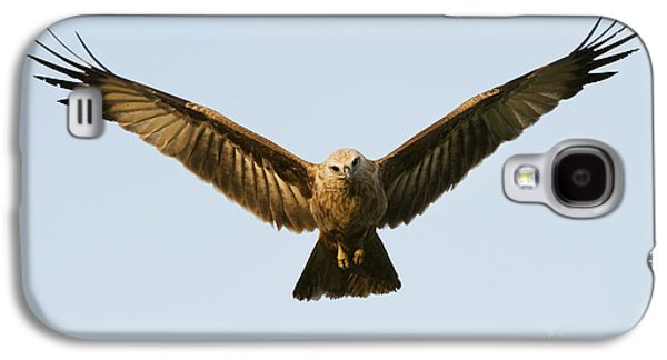 Hovering Galaxy S4 Cases - Juvenile Brahminy Kite Hovering Galaxy S4 Case by Tim Gainey