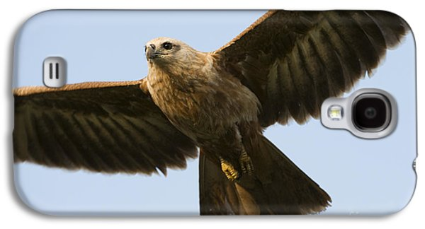 Hovering Galaxy S4 Cases - Juvenile Brahminy Kite Galaxy S4 Case by Tim Gainey