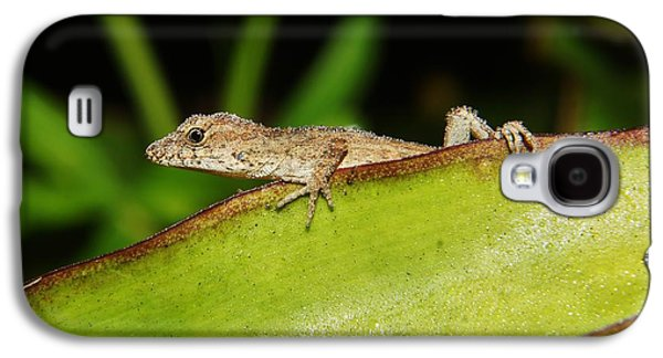 Juvie Brown Anole Galaxy S4 Case by Lynda awson-Youngclaus
