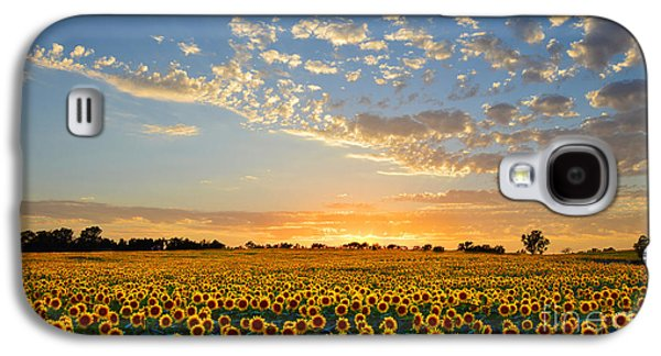 Landmarks Photographs Galaxy S4 Cases - Kansas Sunflowers at Sunset Galaxy S4 Case by Catherine Sherman