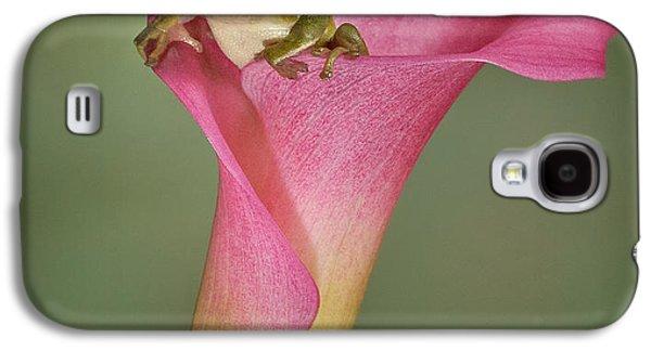 Susan Candelario Galaxy S4 Cases - Kermit Peeking Out Galaxy S4 Case by Susan Candelario