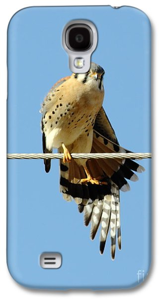Business Decor Galaxy S4 Cases - Kestrel On The Tightwire Galaxy S4 Case by Robert Frederick