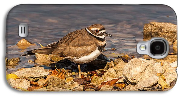 Kildeer On The Rocks Galaxy S4 Case by Robert Frederick