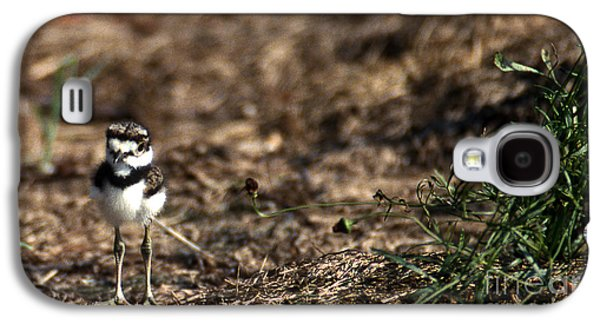 Killdeer Chick Galaxy S4 Case by Skip Willits