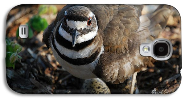 Killdeer Mom Galaxy S4 Case by Skip Willits