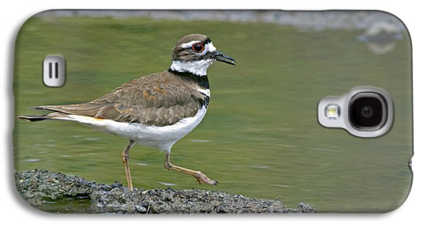 Killdeer Walking Galaxy S4 Case by Sharon Talson