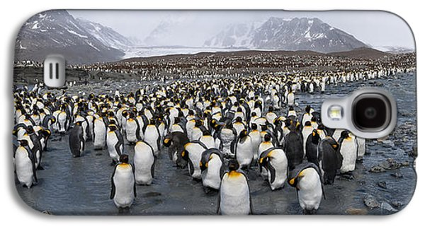 King Penguins Aptenodytes Patagonicus Galaxy S4 Case by Panoramic Images
