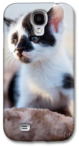 Schwartz Galaxy S4 Cases - Kitten dreaming Galaxy S4 Case by Iris Richardson