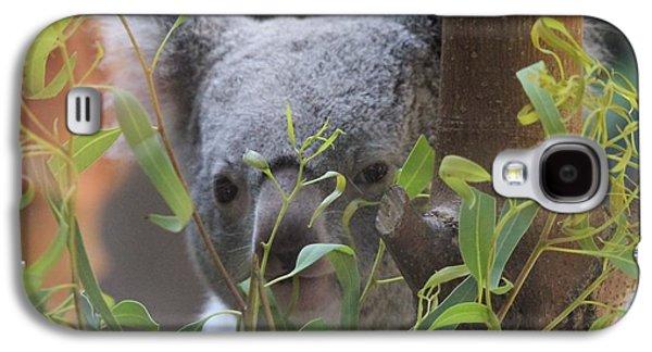 Koala Bear  Galaxy S4 Case by Dan Sproul