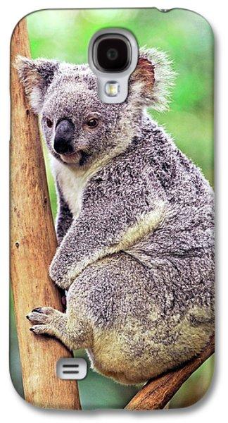 Koala In A Tree Galaxy S4 Case by Bildagentur-online/mcphoto-schulz