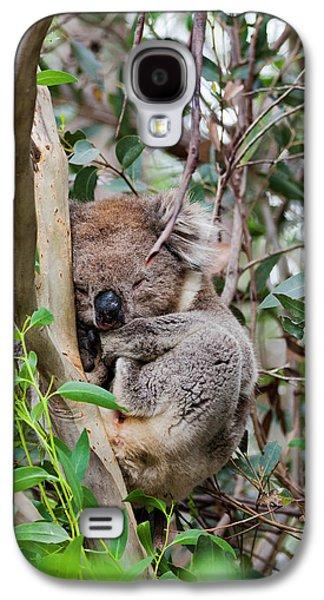 Koala (phascolarctos Cinereus Galaxy S4 Case by Martin Zwick