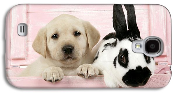 Mixed Labrador Retriever Galaxy S4 Cases - Lab Puppy And Bunny Galaxy S4 Case by John Daniels