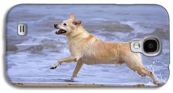 Mixed Labrador Retriever Galaxy S4 Cases - Labrador Cross Dog Running Galaxy S4 Case by Geoff du Feu