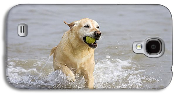 Dog Playing Ball Galaxy S4 Cases - Labrador-mix Retrieving Ball Galaxy S4 Case by Geoff du Feu