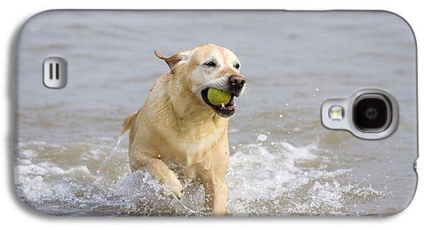 Mixed Labrador Retriever Galaxy S4 Cases - Labrador-mix Retrieving Ball Galaxy S4 Case by Geoff du Feu
