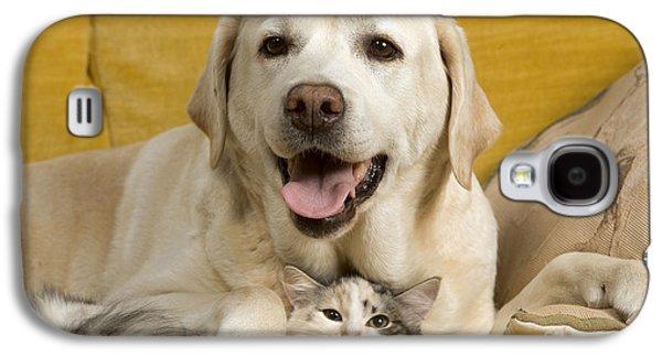 Mixed Labrador Retriever Galaxy S4 Cases - Labrador With Cat Galaxy S4 Case by Jean-Michel Labat
