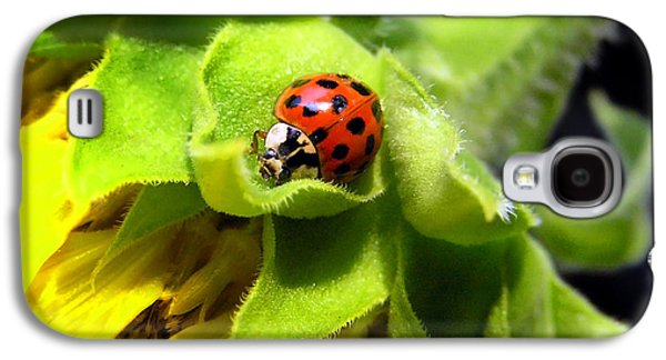 Ladybug Galaxy S4 Cases - Lady Beetle Galaxy S4 Case by Christina Rollo