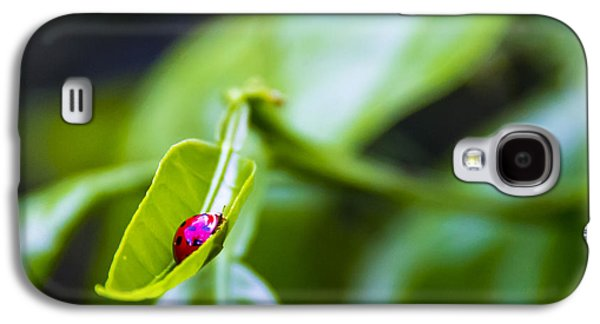Tangerines Galaxy S4 Cases - Ladybug Cup Galaxy S4 Case by Marvin Spates