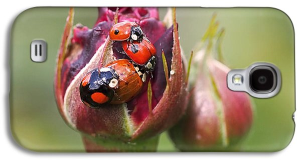 Ladybug Foursome Galaxy S4 Case by Rona Black