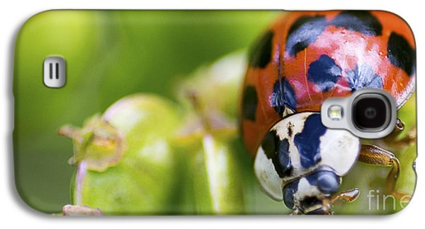 Biology Pyrography Galaxy S4 Cases - Ladybug on a plant Galaxy S4 Case by Michael Bennett