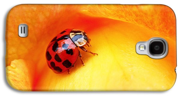 Botanical Galaxy S4 Cases - Ladybug Galaxy S4 Case by Rona Black