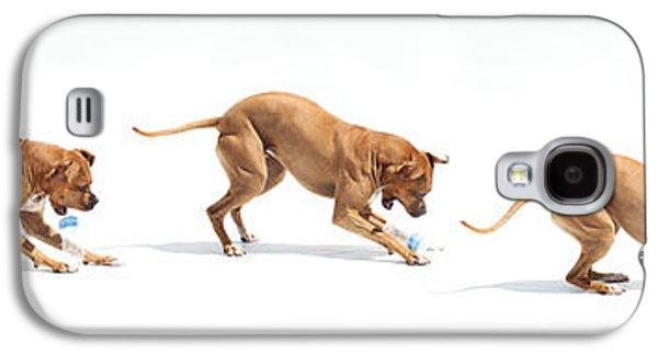 Dogs Digital Art Galaxy S4 Cases - Landfill Kill Galaxy S4 Case by Bonita Ash