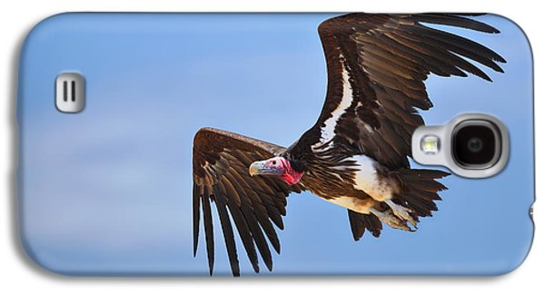 Raptors Galaxy S4 Cases - Lappetfaced Vulture Galaxy S4 Case by Johan Swanepoel