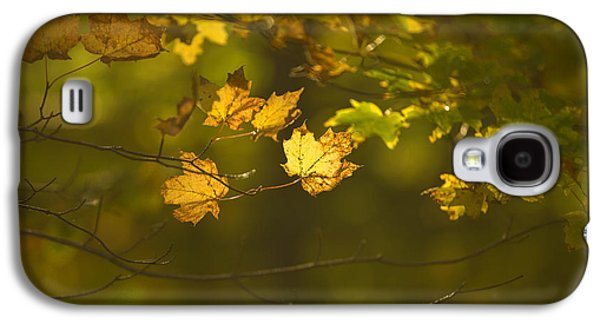 Autumn Foliage Photographs Galaxy S4 Cases - Late Autumn Galaxy S4 Case by Diane Diederich