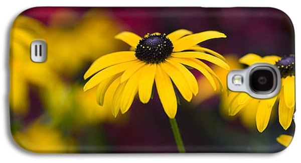 Abstracted Coneflowers Galaxy S4 Cases - Late Summer Rudbeckia  Galaxy S4 Case by Tim Gainey
