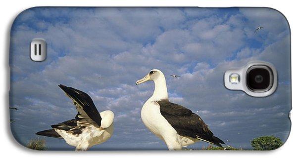 Wildlife Celebration Galaxy S4 Cases - Laysan Albatross Courtship Dance Hawaii Galaxy S4 Case by Tui De Roy