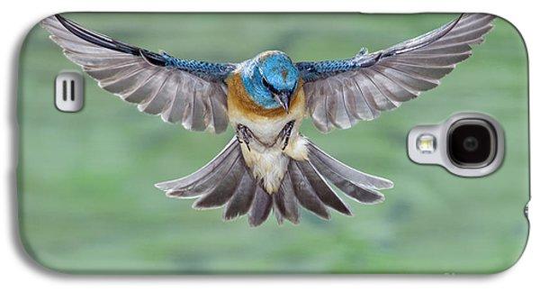 Us Wildllife Galaxy S4 Cases - Lazuli Bunting In Flight Galaxy S4 Case by Anthony Mercieca