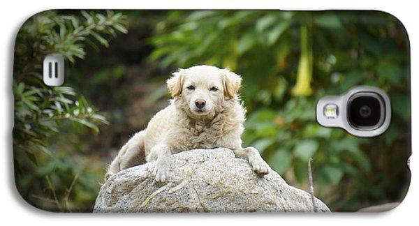 Sleeping Dog Galaxy S4 Cases - Lazy Dog Galaxy S4 Case by Aged Pixel