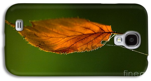 Orange Photographs Galaxy S4 Cases - Leaf on Spiderwebstring Galaxy S4 Case by Iris Richardson