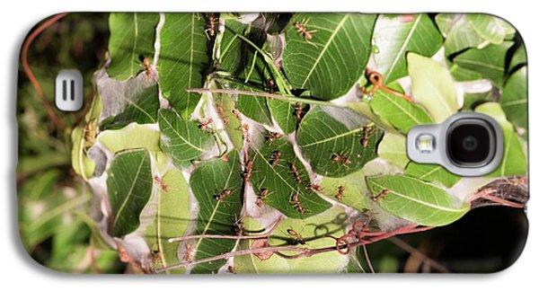 Leaf-stitching Ants Making A Nest Galaxy S4 Case by Tony Camacho