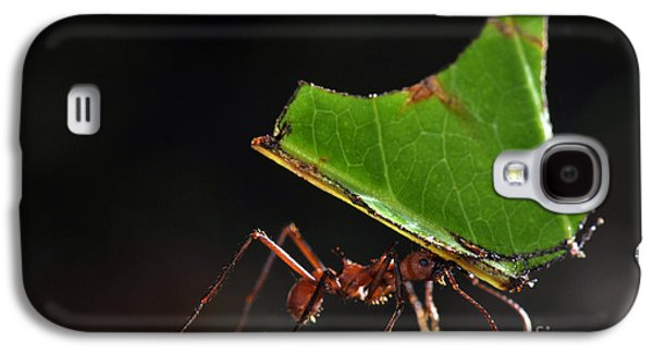 Leafcutter Ant Galaxy S4 Case by Francesco Tomasinelli