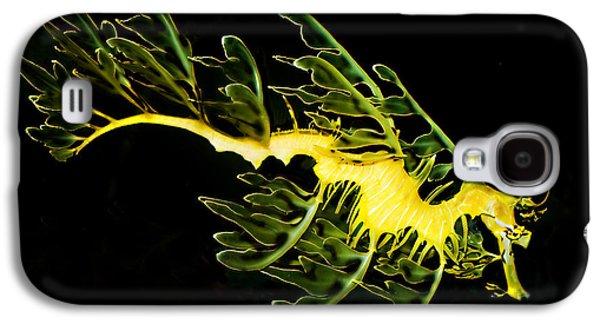 Leafy Sea Dragon Galaxy S4 Cases - Leafy Sea Dragon Galaxy S4 Case by James Roemmling