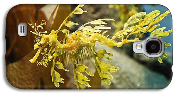 Leafy Sea Dragon Galaxy S4 Cases - Leafy Sea Dragon Galaxy S4 Case by Shane Kelly