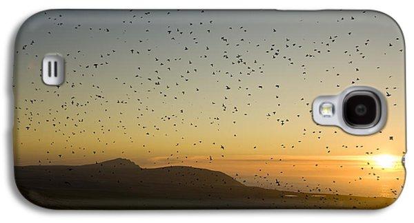 Least Auklets, Returning To Their Nest Galaxy S4 Case by Brian Guzzetti