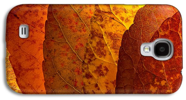 Harvest Time Galaxy S4 Cases - Leaves unmasked Galaxy S4 Case by Chris Bordeleau