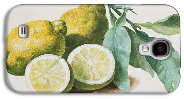 Two Colors Paintings Galaxy S4 Cases - Lemons Galaxy S4 Case by Pierre Joseph Redoute