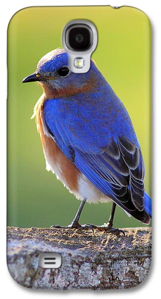 Business Decor Galaxy S4 Cases - Lenores Bluebird Galaxy S4 Case by Robert Frederick