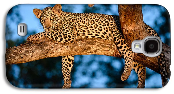 Leopard Pyrography Galaxy S4 Cases - Leopard in marula tree Galaxy S4 Case by Andrew Chislett