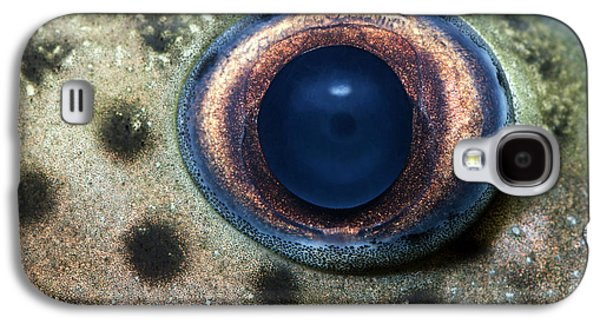 Leopard Sailfin Pleco Eye Abstract Galaxy S4 Case by Nigel Downer