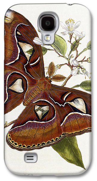 Wild Life Drawings Galaxy S4 Cases - Lepidoptera Galaxy S4 Case by Edward Donovan